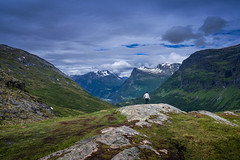 Explore the Aamzing (Mahmood Hamidi) Tags: norge norway norwegen mountains fjäll fjord top snow landscape landscapes