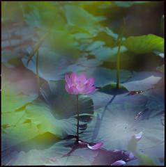 90-001 (Eason Zhang) Tags: lotus hasselblad500cm sonnarcf150 rvp100