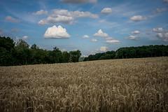 La plaine (vostok 91) Tags: vostok91 canon eos40d efs24mmf28stm nature champ blé ciel nuages