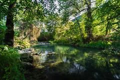 (Nicolas Pluquet) Tags: céou dordogne eau rivière arbres paysage sony ilce7m2 a7ii voigtlander
