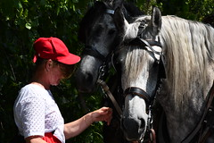 Horses. (L_u_c) Tags: woman femme hat chapeau red rouge couleur color colour horse cheval horses workhorse chevaux nikon