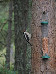 Woodpecker (mike_j's photos) Tags: bird woodpecker scotland lochgarton rspb