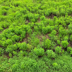 - (Hideki-I) Tags: kansai japan green grass iphone square