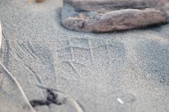 print (feefoxfotos) Tags: contrasts beach textures patterns