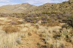 Butterfield Overland Mail Trail - Apache Pass (rschnaible) Tags: arizona southwest desert outdoor landscape butterfield overland mail trail history historic mountains apache pass