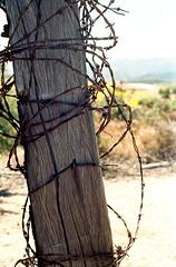 In Random Fashion (squirtiesdad) Tags: fence wooden post barbedwire summitvalley pentax spotmatic sp1000 takumar 55mm f18 epson v600 analog analogue ektar iso100 color negative 35mm film c41