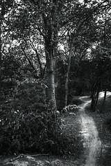 tree trunk@walking path 16 (Amselchen) Tags: tree monochrome plants blackandwhite bnw mono forest woods light shadow monotone sonyilce7rm2 sony sigma sigma19mmf28exdn footpath trail