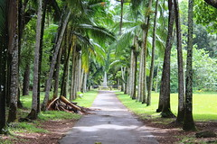 Tree Lined Path (Rckr88) Tags: tree lined path treelinedpath treelinedpathway pathway road roads walkway walk greenery green pamplemousses mauritius trees garden gardens botanical botanicalgardens botanicalgarden botany nature naturalworld outdoors travel travelling
