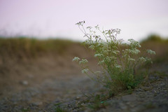 (Knipser85) Tags: sony a6300 alpha 6300 nature kamlan 50mm 11