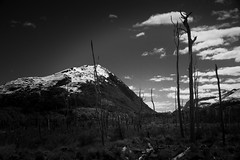 What shall we use to fill the empty spaces? (.KiLTЯo.) Tags: kiltro cl chile magallanes tierradelfuego patagonia landscape trees mountain clouds nature