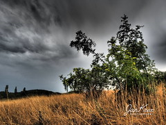 Bulgaria (Jan-Krux Photography - thx for 5Mio+ views) Tags: bulgaria bulgarien landscape landschaft feld field hill huegel busch bush forest wald wiese grass afternoon evening clouds wolken thunderstorm gewitter regen rain dunkel dark dramatic dramatisch olympus omd em1 olympus1240mmf28 haskovo