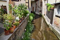 Home Sweet Home (r.wacknitz) Tags: quedlinburg harz architektur altstadt historic backyard water sachsenanhalt outside nikond5600 tamron18200 luminar18 mühlgraben