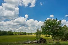 schapenpark Odoorn (Jos Mecklenfeld) Tags: forest wald bos nature natur natuur schapenparkodoorn sonya6000 sonyilce6000 sonyepz1650mm selp1650 niederlande landscape landschaft landschap nederland odoorn drenthe netherlands