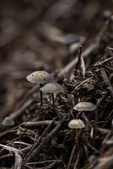 Forêt réunionaise (Nathan Quentin) Tags: mushrooms champignons champignon tropical foret reunion island ile de la réunion