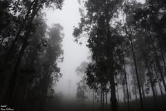 The dark forest (Ismael Owen Sullivan) Tags: d5300 digital dark oscuridad oscuro bosque photography pontevedra paisaje galicia españa europa europe travel turismo traveler nikon nature naturaleza natural landscape siniestro arbol