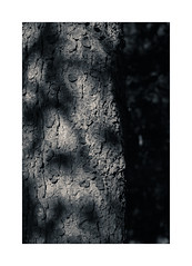 NG LXIV ([ Time - Beacon ]) Tags: nature tb bw blackandwhite blackwhite bnw monochrome lightshadow bark trunk tree