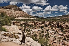 looking upcanyon (rovingmagpie) Tags: colorado canyonsoftheancientsnationalmonument sandcanyon painted layers sl2019