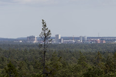 I need a chainsaw (Steffe) Tags: tree view tornberget observationtower utsiktstorn haninge sweden