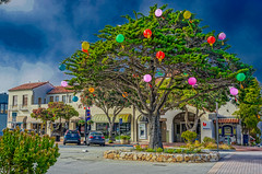 DSC09634--Pacific Grove, CA (Lance & Cromwell back from a Road Trip) Tags: pacificgrove montereycounty montereypeninsula central travel california roadtrip 2019 sony