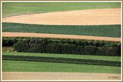 Vision champêtre 190706-01-P (paul.vetter) Tags: champs couleurs zurich