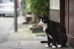 猫 (fumi*23) Tags: ilce7rm3 sony sel85f18 85mm fe85mmf18 a7r3 animal alley cat gato neko depthoffield street emount ねこ 猫 ソニー