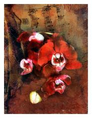 Sensual Harmony (kinglear55) Tags: flower orchid texture film ishootfilm filmisnotdead montage danscamera fujisuperia adobe elements microsoftdigitalimagesuite