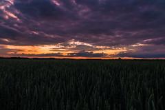 Sonnenuntergang Querformat (Daniel auf Weltreise) Tags: sonnenuntergang sunset natur abenddämmerung woken