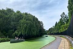 Regent's Curves … (marc.barrot) Tags: uk trees london landscape canal towpath n1 regent'scanal regent'spark shotoniphone stjohn'swood boats cyanobacteria bluegreenalgae