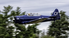 """""""Roll Out""""  Craig Nelson piloting his 1960 North American SNJ-5 Texan C/N 88-15173 (N154CF) during the Heritage Flight Museum July 13, 2019 Fly Day at Skagit Regional Airport KBVS, Burlington Washington. (Hawg Wild Photography) Tags: craig nelson heritageflightmuseum skagitcountywashington skagitregionalairport kbvs warbird 1960 north american snj5 texan cn 8815173 n154cf terrygreen nikon d850 hawg wild photography sigma 150600mm contemporary"""
