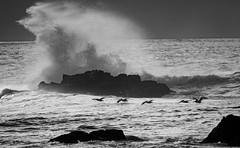 flying under the crashing waves