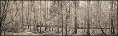 (Ryan Duffy2009) Tags: canon 6d canon6d canondslr canonef24105mmf4lisusm 24 105 24105 24105mm nature landscape panorama composite black white bw blackandwhite sepia monochrome tone