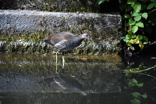 Basingstoke Canal Deepcut 18 July 2019 003
