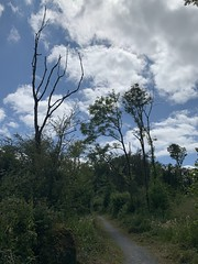 Dromore Wood - County Clare, Ireland - July 2019 (firehouse.ie) Tags: roi eire ireland ruan countyclare clare rabbitisland trees nature woods trail lake wood dromore