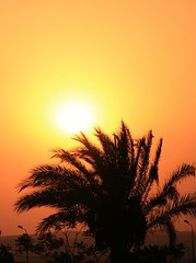 Sunset in desert (philos from Athens) Tags: desert egypt beverlyhills picmonkey