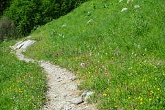 Hike to Chalets de Varan (*_*) Tags: hiking mountain montagne nature randonnee trail sentier walk marche europe france hautesavoie 74 passy savoie faucigny summer ete 2019 june