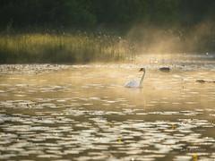 DSC06845 (fotolasse) Tags: soluppgång djur animal natur nature sweden tingsryd canon sony