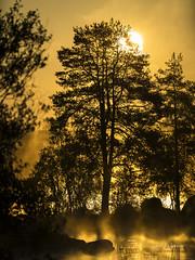DSC06833 (fotolasse) Tags: soluppgång djur animal natur nature sweden tingsryd canon sony