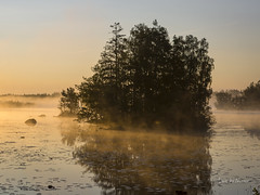 _61A6707 (fotolasse) Tags: soluppgång djur animal natur nature sweden tingsryd canon sony