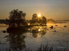 _61A6702 (fotolasse) Tags: soluppgång djur animal natur nature sweden tingsryd canon sony