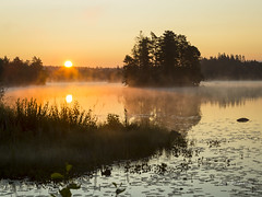 _61A6686 (fotolasse) Tags: soluppgång djur animal natur nature sweden tingsryd canon sony