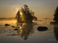 _61A6714 (fotolasse) Tags: soluppgång djur animal natur nature sweden tingsryd canon sony