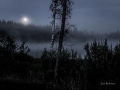 _61A6670 (fotolasse) Tags: soluppgång djur animal natur nature sweden tingsryd canon sony