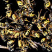 Dead Wasps : Welcome at Anthropocene