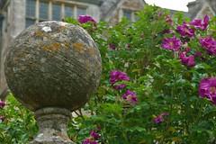 Roses and Stone Ball (John of Witney) Tags: garden flowers roses chastleton chastletonhouse nt nationaltrust oxfordshire