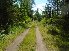 Unused M&W Railbed Looking East. (AbandonedNatureRails3) Tags: railroad railbed abandoned abandonedrailroads vermont crossvttrail railtrail montpelier wells river