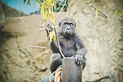 Happy Monkey (AshleyAbbottPhotography) Tags: animals animal monkey monkeys cute zoo