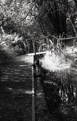 Churwell Woods 1 (vickyhindle) Tags: 35mmfilmphotography blackwhite churwell woods canoneos3 canonef50f14 ilfordfp4 ilfosol3developer