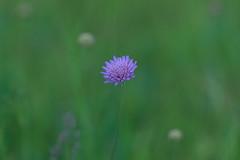 (Knipser85) Tags: sigma 105mm 28 macro lens sony alpha a58 nature plants pflanzen flower blumen