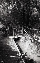 Churwell Woods 2 (vickyhindle) Tags: 35mmfilmphotography blackwhite churwell woods canoneos3 canonef50f14 ilfordfp4 ilfosol3developer