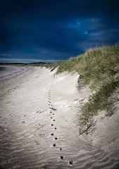 Walk This Way (val.moir) Tags: northuist outerhebrides scotland beach sand pawprints landscape